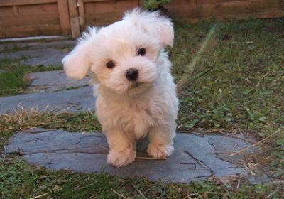 cachorro perfecto