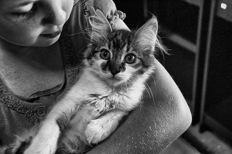 Un gato para los peques