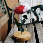 Rosa de la Bella y la Bestia, un regalo eterno